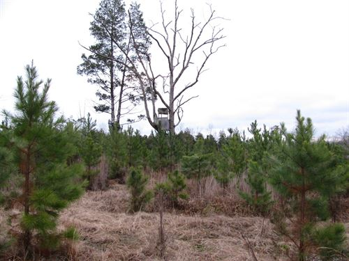 Deer Hunting Land Tn, Creek, Owner : Saltillo : Hardin County : Tennessee