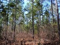 Long Pine East : Midland : Cabarrus County : North Carolina