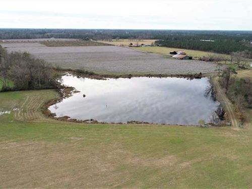 300 Acre Working Farm For Sale in : Hoboken : Brantley County : Georgia