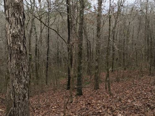 40 Acres In Holmes County In West : West : Holmes County : Mississippi