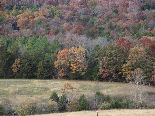 Kings River Acreage Eureka Springs : Eureka Springs : Carroll County : Arkansas