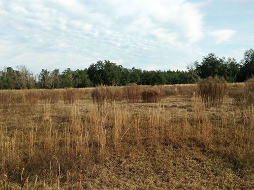 4.8 Acres In Lake City, Florida : Lake City : Columbia County : Florida
