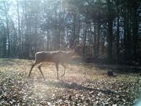 Missouri Hunting Land Wappapello MO : Wappapello : Wayne County : Missouri