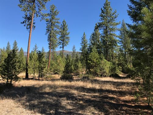 Hunting Property In Montana : Plains : Sanders County : Montana