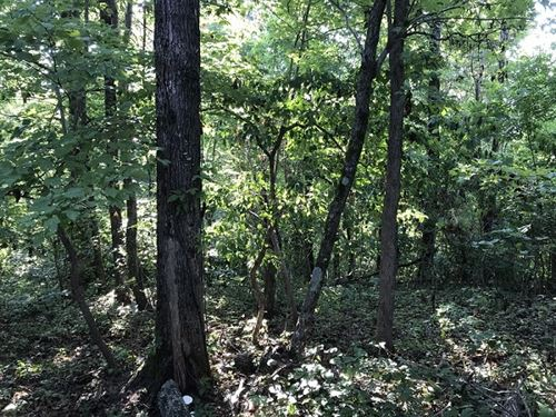 Remote Hunting Recreational Land : Witts Springs : Searcy County : Arkansas