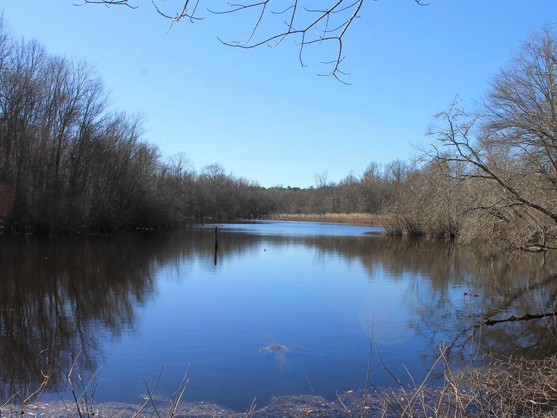 Warm Springs Tree Farm : Warm Springs : Meriwether County : Georgia