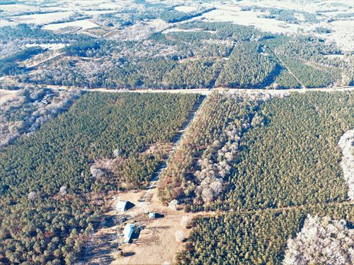 Pine Plantation With Creek Frontage : West Green : Coffee County : Georgia