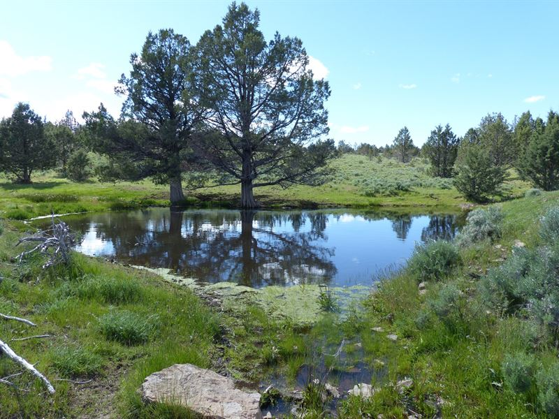 Lone Pine Parcel 2, 160 Acres North : Burns : Harney County : Oregon