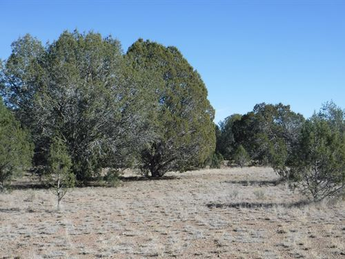 40 Acres $18,000, Owner Financing : Ash Fork : Coconino County : Arizona