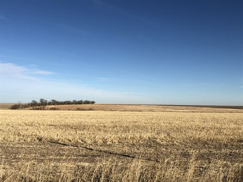 Cheyenne County Crop & Grass : Saint Francis : Cheyenne County : Kansas