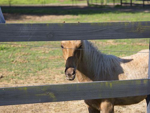 Blackwater Equestrian Acreage : Quitman : Brooks County : Georgia