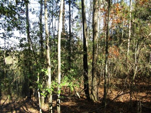 133 Acres In Covington County In CO : Collins : Covington County : Mississippi