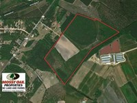 113 Acres of Timber And Farm Land : Raeford : Hoke County : North Carolina
