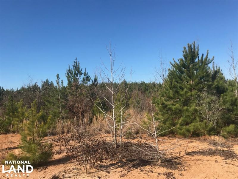 Lindsey Road Kennedy Hunting Tract : Land for Sale ...