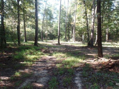 433 Ac, Hunting Tract Joining Big : Buna : Jasper County : Texas