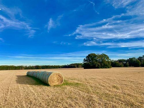 Bryant Subdivision, 5 Acres : Trenton : Gilchrist County : Florida