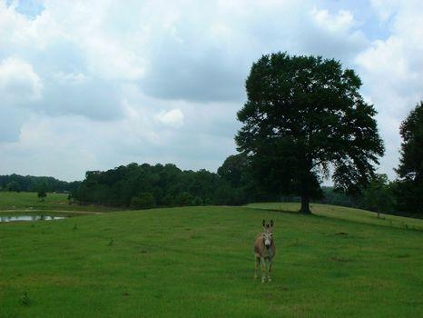 15 Acres W/pond : Montgomery : Montgomery County : Alabama