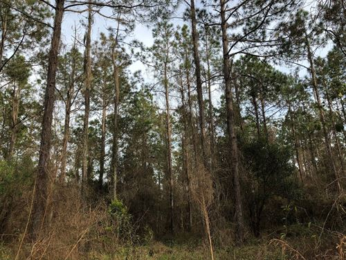 Timber, Land, Vacant, Industrial : Hawthorne : Alachua County : Florida