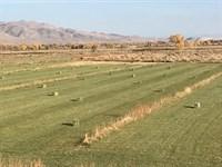 Home Horse Ranch/Farm Water Rights : Yerington : Lyon County : Nevada
