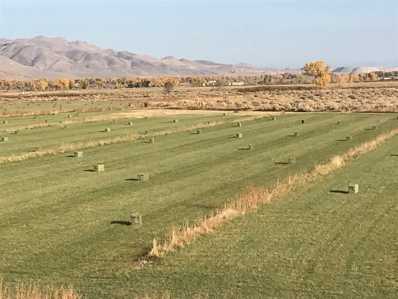 Hay Farm Yerington NV Home 40 Acres : Yerington : Lyon County : Nevada
