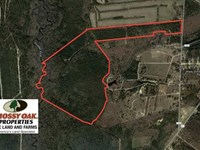 Reduced, 139 Acres of Timber : Raeford : Hoke County : North Carolina