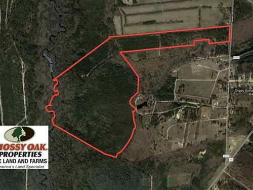 139 Acres of Timber And Hunting LA : Raeford : Hoke County : North Carolina