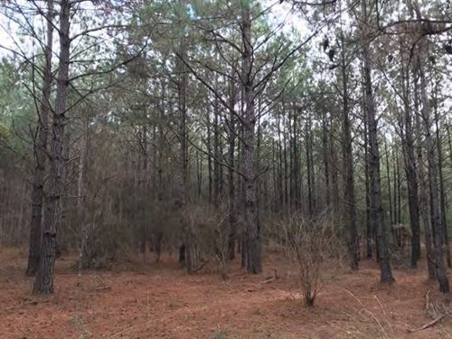 63 Acres In Forrest County In Hatti : Hattiesburg : Forrest County : Mississippi
