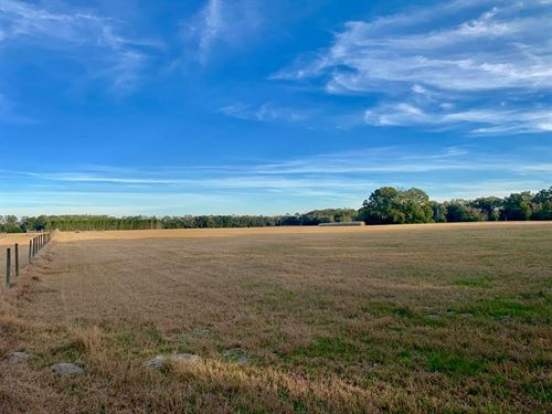 5 Acres, Vacant Land, Bryant : Trenton : Gilchrist County : Florida