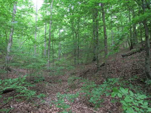 3.2 Buildable Wooded Acres TN River : Linden : Perry County : Tennessee