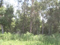 Lacy Woods : Monticello : Jefferson County : Florida