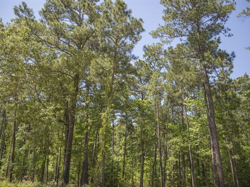 3.7 Ac Wilderness Estates Tr 5-4 : Point Blank : San Jacinto County : Texas