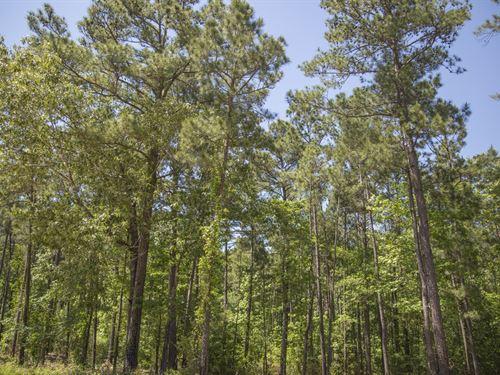 4.1 Ac Wilderness Estates Tr 5-6 : Point Blank : San Jacinto County : Texas