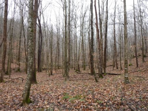 72.71 Acres, Creek, Building Sites : Jamestown : Fentress County : Tennessee