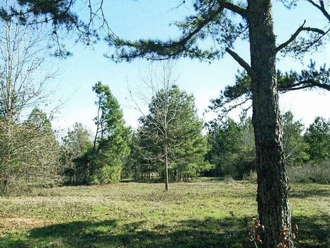10 acre lots Pine Level 231-lot 1 : Ramer : Montgomery County : Alabama