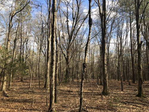 Wooded With Hwy Frontage : Anderson : South Carolina