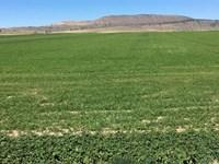 Klamath Falls Crop Farm : Klamath Falls : Klamath County : Oregon