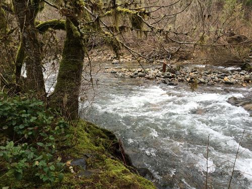 Sharps Creek : Dorena : Lane County : Oregon