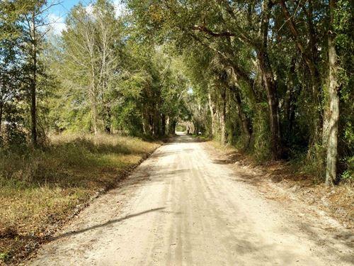 4 Acres Of Land In Suwannee County : Wellborn : Suwannee County : Florida