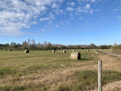 Paso Fino 70 Acres : Clermont : Lake County : Florida
