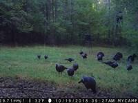 Skull Shoals Hunting Retreat : Hickory Grove : Cherokee County : South Carolina