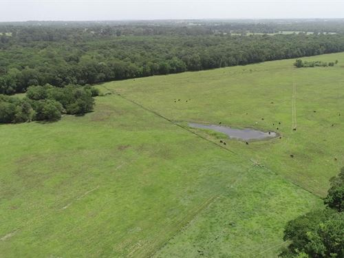 Weaver Ranch, 60 Acres : Montgomery : Texas
