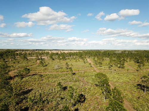 200 Acre Hunting And Recreational : Okeechobee : Florida