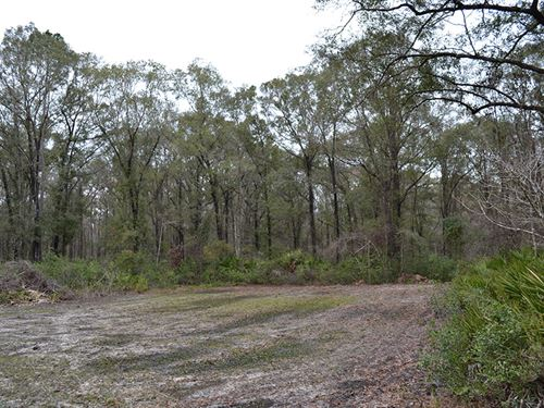 Alachua County Hunting Tract : Waldo : Alachua County : Florida