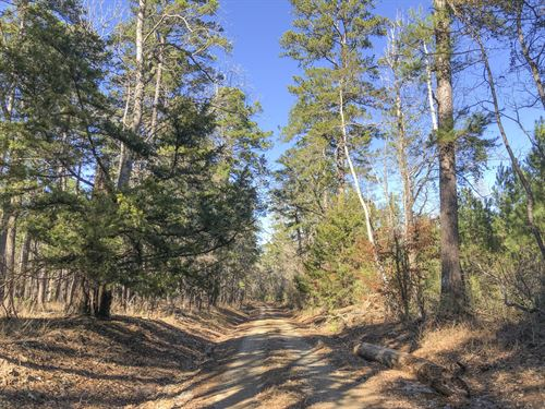 200 Ac Usfs Rd 513 : Kennard : Houston County : Texas