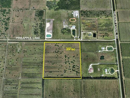 Pasture, Artesian Well & Oaks : Fort Pierce : Saint Lucie County : Florida