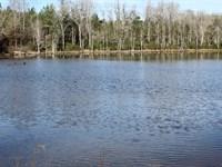 Beautiful 160 Ac Recreational Trac : Mauk : Taylor County : Georgia