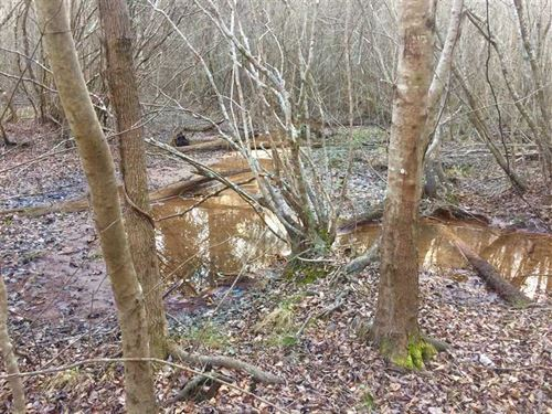 Great Hunting Tract on Big Indian : Fort Valley : Peach County : Georgia