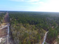 Shaw Highway 57 Acres : Rocky Point : Pender County : North Carolina