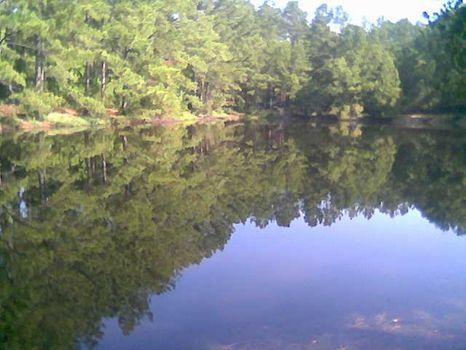 Gorgeous 160 Acres S. Montgomery Co : Montgomery : Montgomery County : Alabama