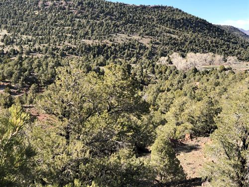 40 Acres Vacant Land Virginia City : Virginia City : Storey County : Nevada